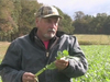 Brassica Food Plot Update